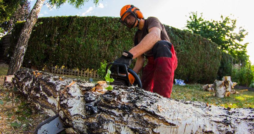 entreprise élagage d'arbres