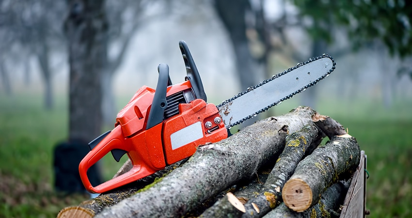 entreprise abattage déssouchage arbre
