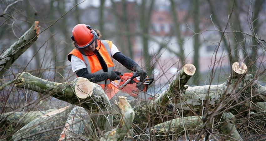 Les précautions à prendre avant d'abattre un arbre
