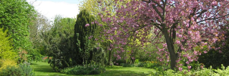 Des Élagueurs Qualifiés pour votre Jardin