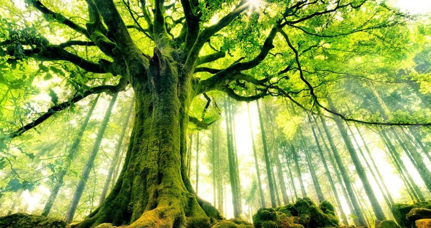 Déterminer l'état de santé de vos arbres
