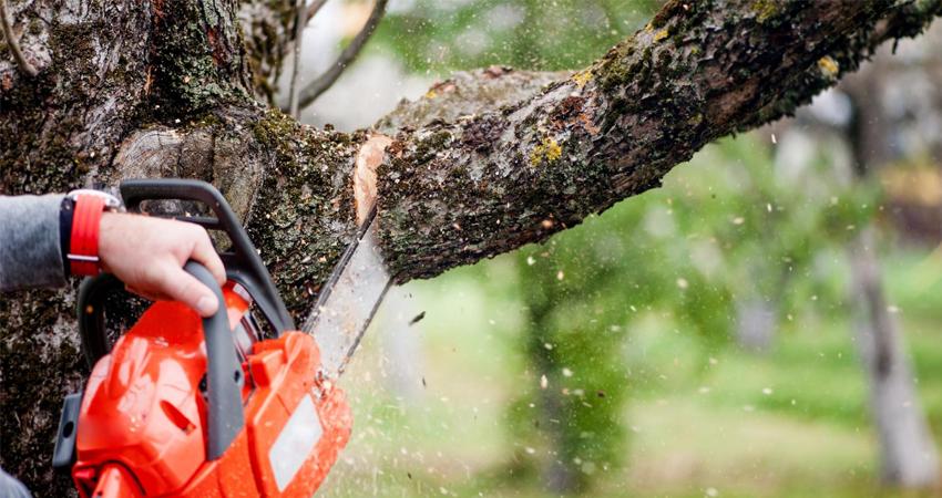 5 conseils pour un élagage parfait de vos arbres
