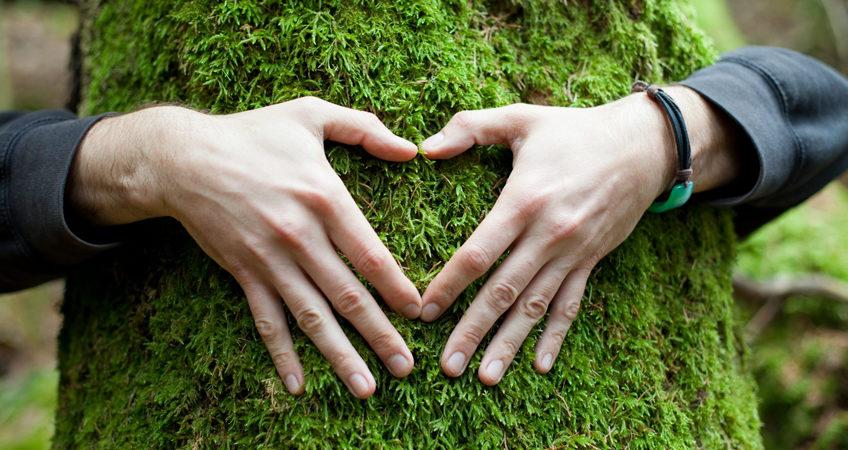 santé des arbres