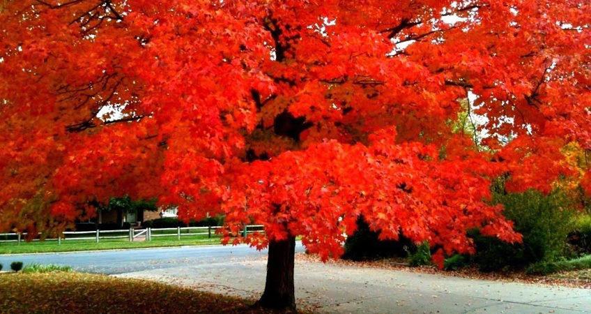 feuilles d'arbres en automne