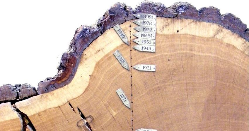 Dendrochronologie : l'art de lire l'âge des arbres