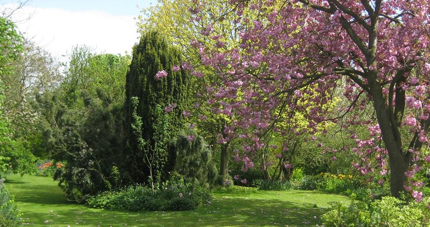 Arbres à feuilles caduques ou persistantes : comment choisir ?