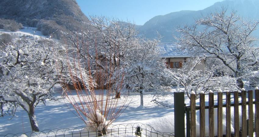 Conseils pour l'entretien de votre jardin en hiver