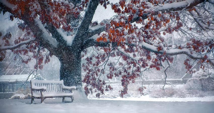 Comment prendre soin de vos arbres en hiver